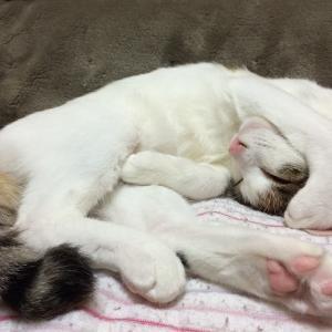 猫・猫・猫、猫を拾った。