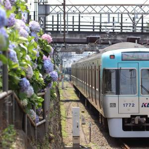 【撮影記】21.6.8 沿線の紫陽花が満開・井の頭線