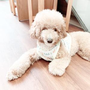 ❁.。.:*:.。犬カフェ♡Doradora-cafe2❁.。.:*:.。
