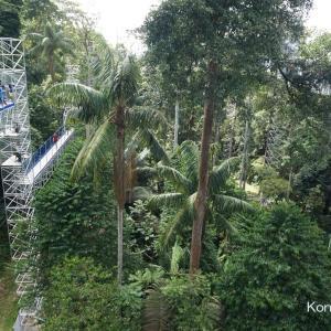 KL市内も一望できる!森の中の空中散歩@Kepong【Malaysia 遊び】