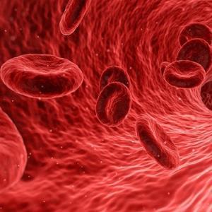 【シナモンの健康効果】毛細血管を若く保つすごいヤツ