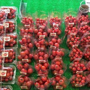 出雲市知井宮町のトマト直売所『出雲の加田屋』は美味しさと品質は確か!その秘密とは