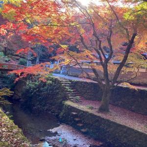 出雲市平田の鰐淵寺の紅葉を見に行って来ました!