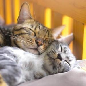 大切な人にすすめたい本、「睡眠こそ最強の解決策である」