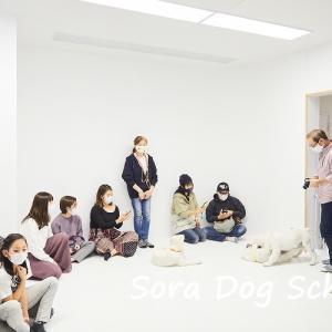 雪の子犬たち、一ヶ月振りにママ犬に再会の様子。「お悩みお悩み相談会&撮影会」