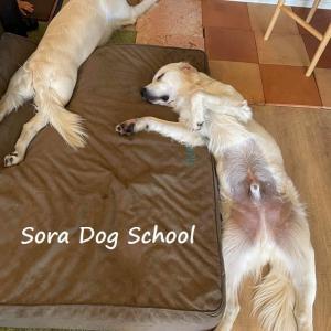トレーナーの犬でもこんなことは起こる(笑)part3