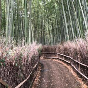 自転車持たずに旅に出た 京都編②
