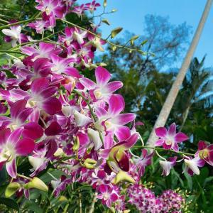 街歩きの冒険家 in National Orchid Garden