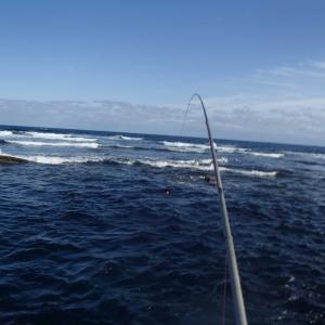 釣り馬鹿Gちゃん釣行記 行って来ましたメジナ釣り3
