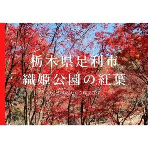 足利市織姫公園もみじ谷の紅葉が見事!