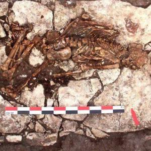 クリミア半島で開頭手術を受けたスキタイ時代の男性の遺骨が発掘される