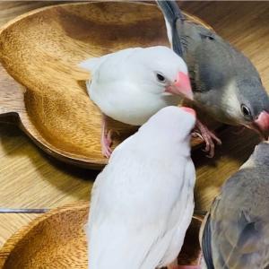 ペット人気ランキング 鳥(bird)