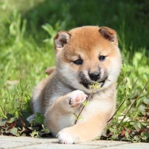 【癒し】可愛い犬まとめ