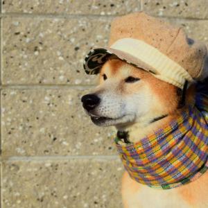 冬に気を付けて欲しい、犬の病気や症状