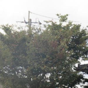 景色を変えてしまった樹木 + 今月の電気代