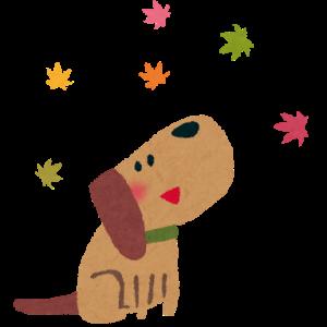 転勤族こそ犬を飼うべき4つの理由