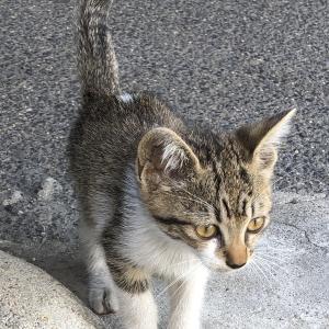 子猫がうちにやってきた