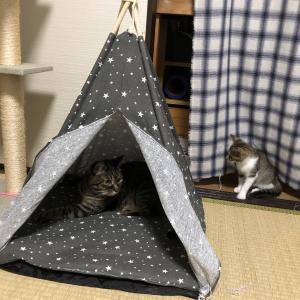 猫さんたちのテント