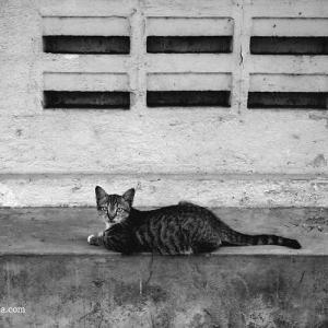 お猫様、クアラルンプール、マレーシア 2015