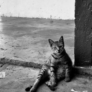 お猫様、クアラルンプール、マレーシア 2012