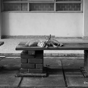 兄弟お猫様、クアラルンプール、マレーシア 2011