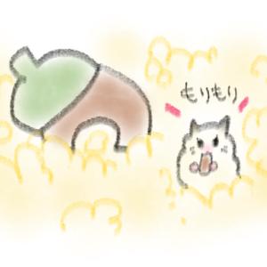【飼育環境】はねちゃんのどんぐりハウス