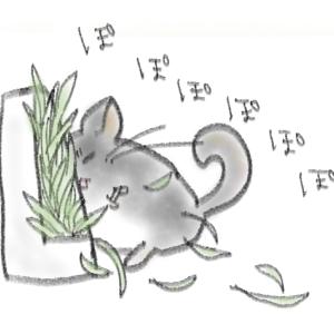 【お世話】食育牧草を試してみました、続き