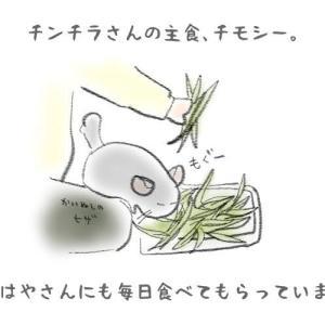 【絵にっき】チモシーの変色(?)