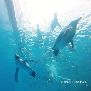 海の生き物たちに癒される。