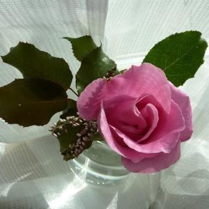今回は自宅のバラ。
