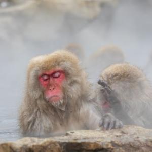 温泉の猿とETのポスター