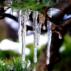 雪の白糸の滝