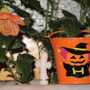 プチパニエの育て方|可愛らしいオレンジ色の花は、ハロウィンにぴったり!