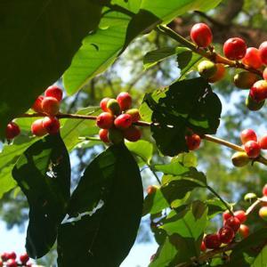 コーヒーって漢字でかける?