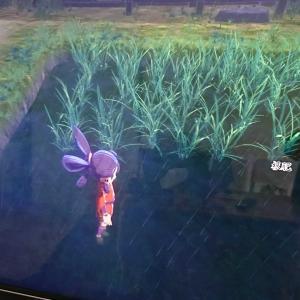 稲作始めました
