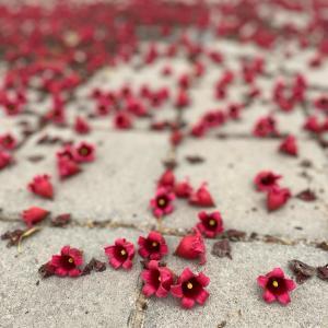 花のじゅうたんに癒される