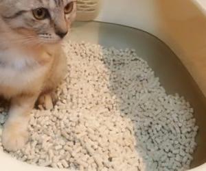 ツンデレだけど意外と気遣いの動物⁈ 猫がトイレで砂をかける理由