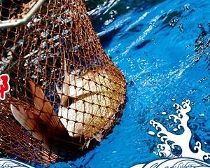【 可児市の浜焼きで有名な 魚太郎 】南知多から直送の新鮮な海鮮丼が味わえるので、湯の華アイランドに行ってきました。