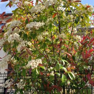 庭の木に花が咲いた