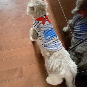猫のフク、犬のフン