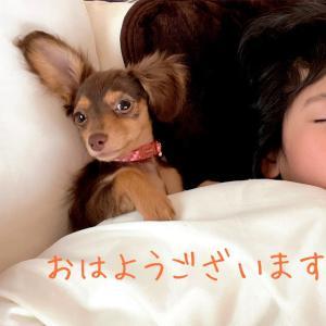 寝床事情や日光アレルギー