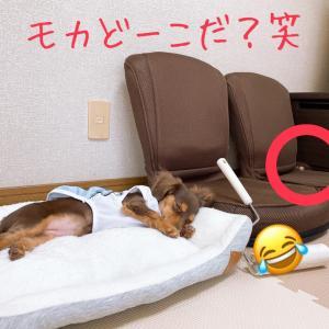 どこでも寝れます。子犬すごいな