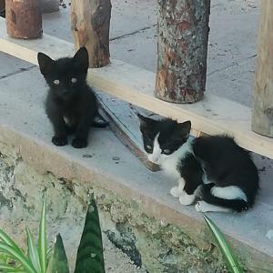 里親決定 仔猫2匹