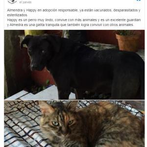 保護犬・保護猫
