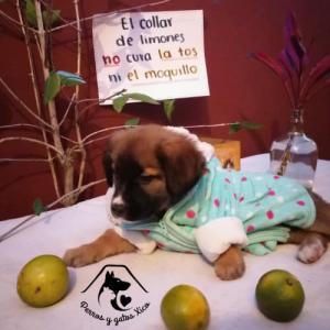 保護仔犬たちでメッセージを伝える写真①