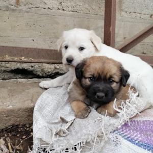新しい保護子犬たち