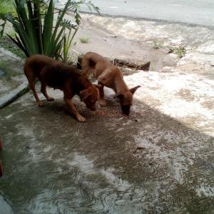 最近うちに来る母犬とその子犬