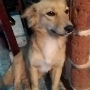 隣の町の元地域犬