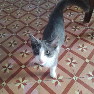 保護子猫エスキナ君  ウエラちゃん迷子です