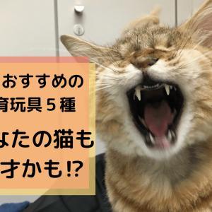 【レベル5までできれば天才】食いしん坊な猫におすすめの知育玩具5種